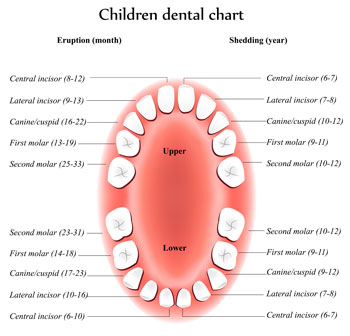 Tooth Eruption Chart - Pediatric Dentist in Parker, CO